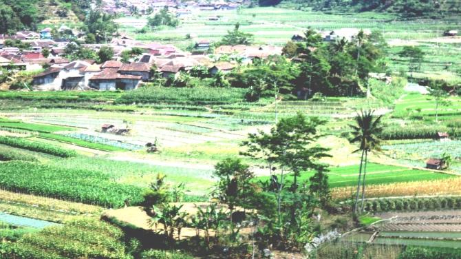 alam desa